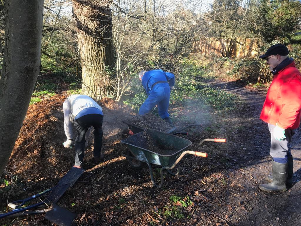 Digging woodchip to mulch trees