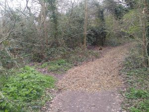 Woodland path covered with a layer of woodchip