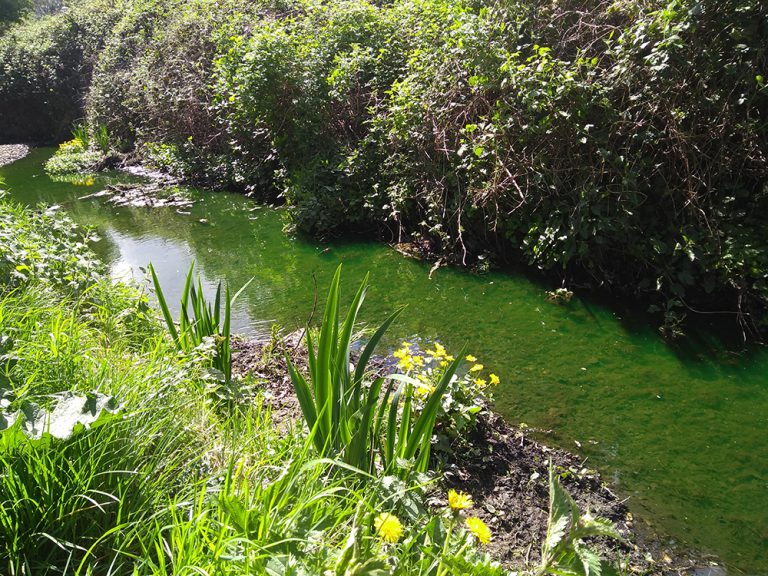 Stream looking luminous green
