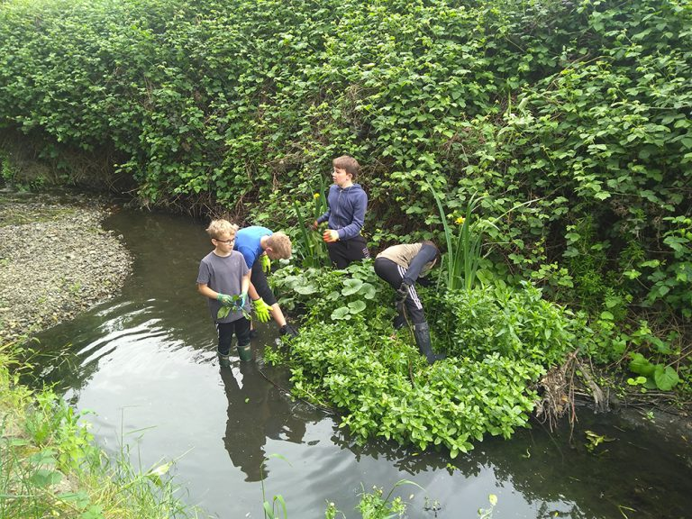 Youn volunteers in the stream helping