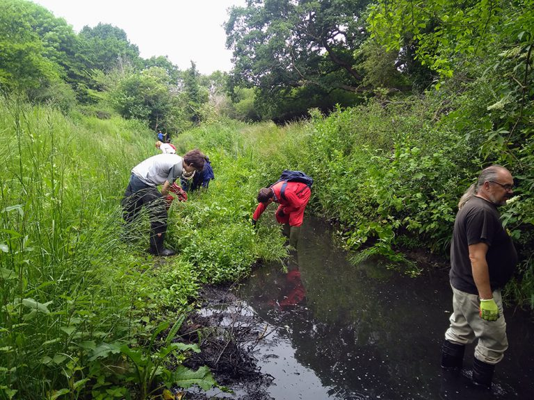 Volunteers in the stream hunting for Himalayan Balsam