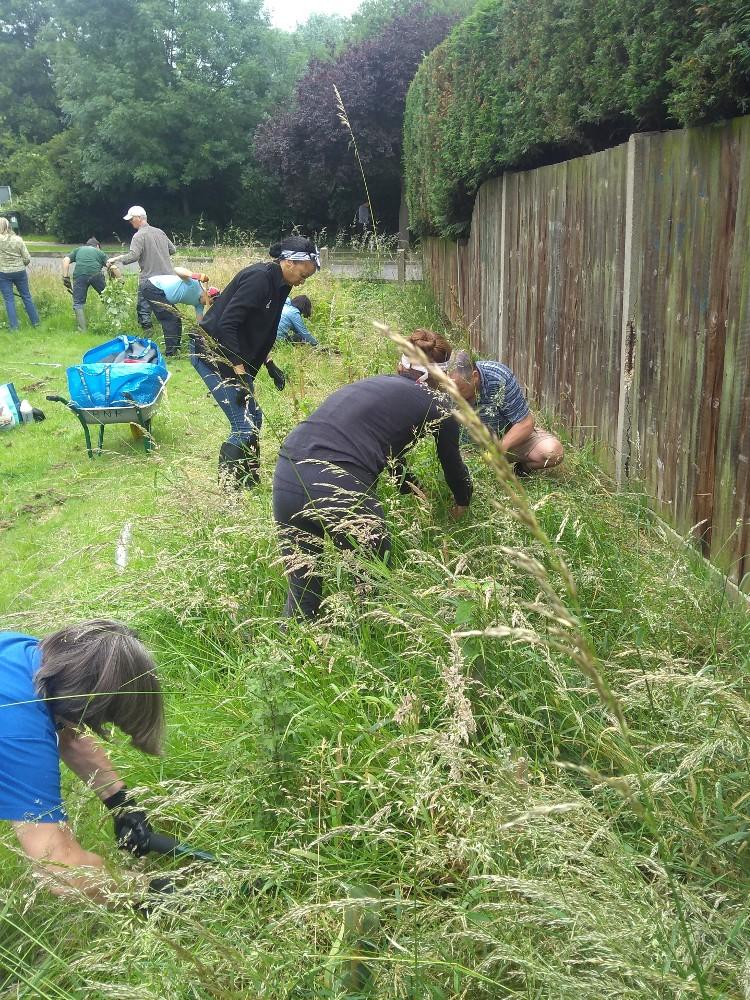 Volunteers cutting back overgrown vegetation