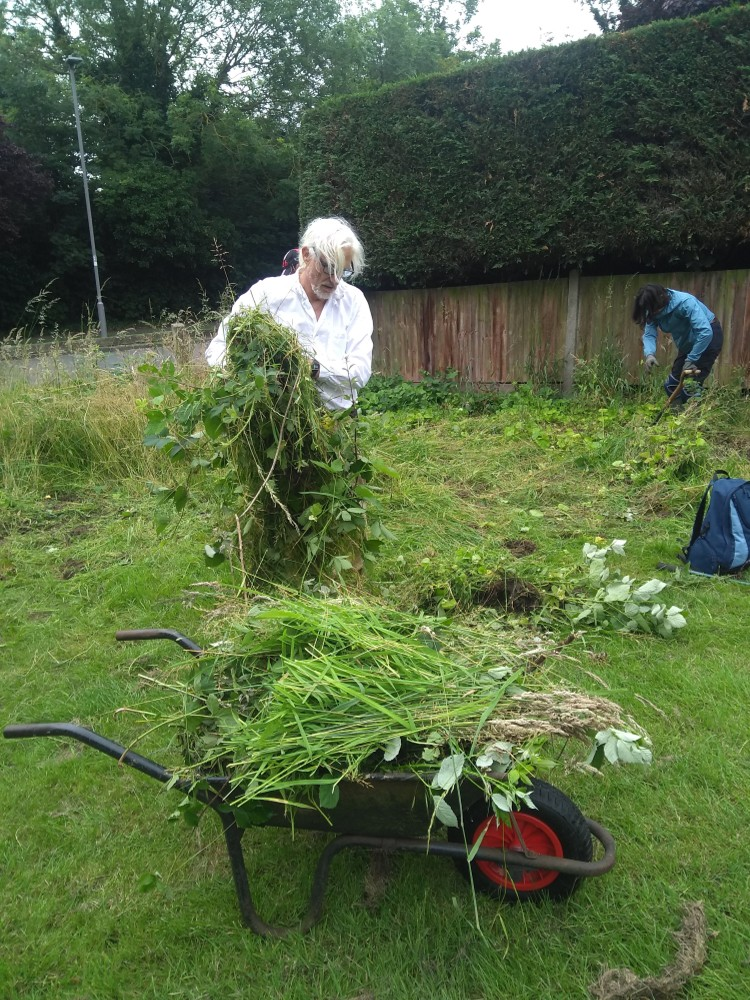 Volunteer loading wheelbarrow with cuttings