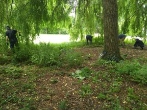 Area under tree covered in nettles