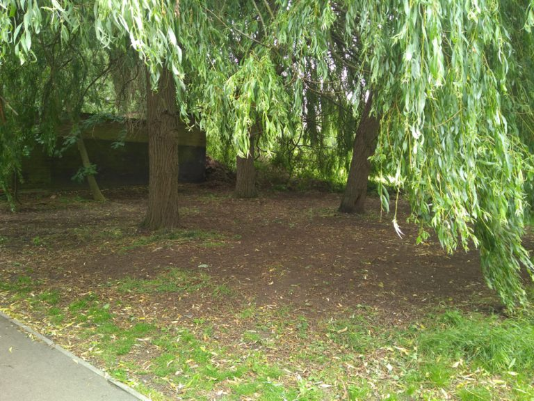 Area cleared under willow tree