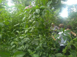 Volunteers chatting in amongst balsam