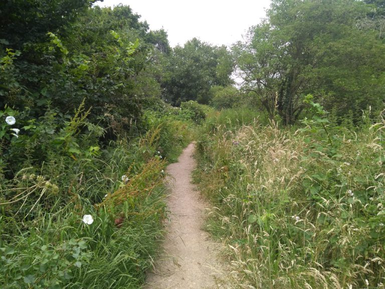 Path looking overgrown