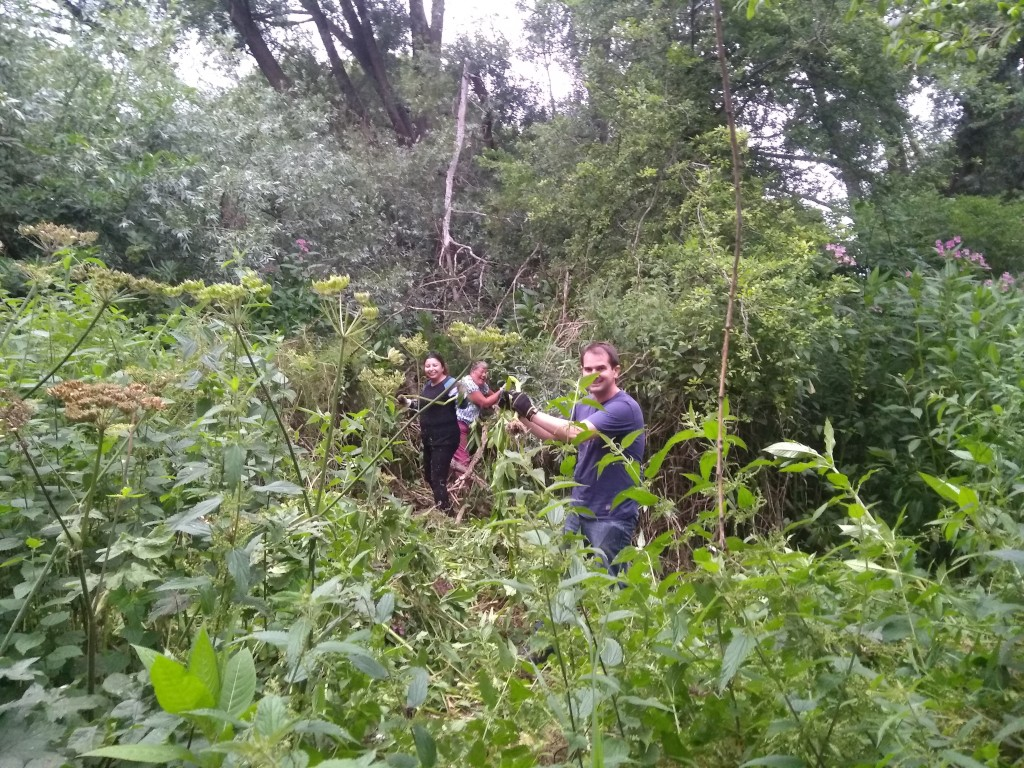 Volunteers pulling up balsam