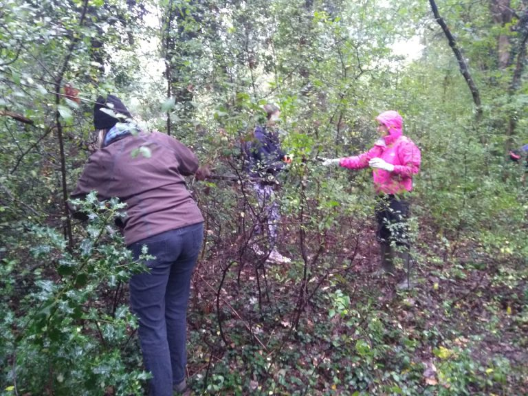 Volunteers thinning out blackthorn
