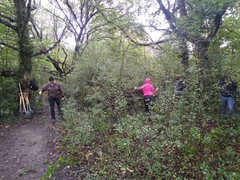 Volunteers in amongst blackthorn thinning
