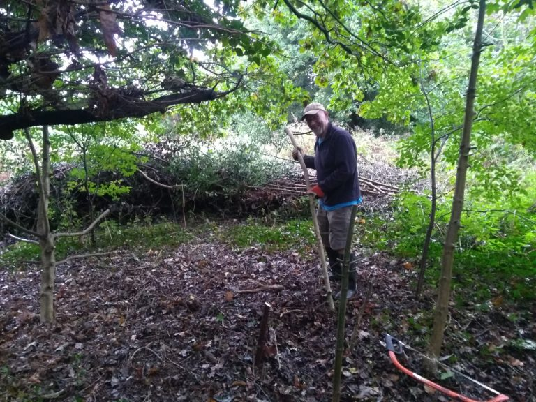 Volunteer clreaing around oak tree