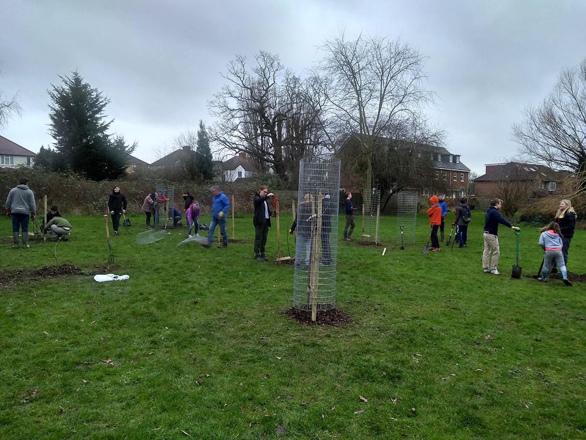Volunteers finishing caging the last few trees