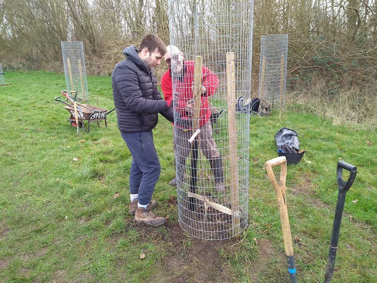 Opening up a tree cage to replace the tree
