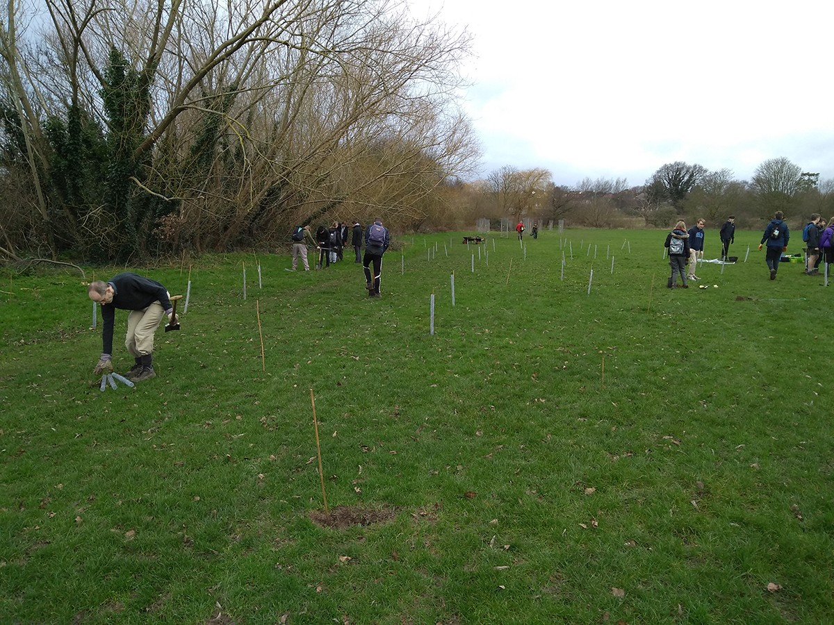 Plantingsaplings away from the orchard