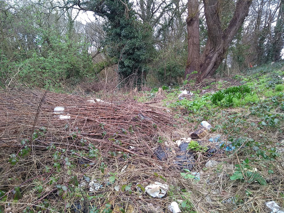 Woodland strewn with litter