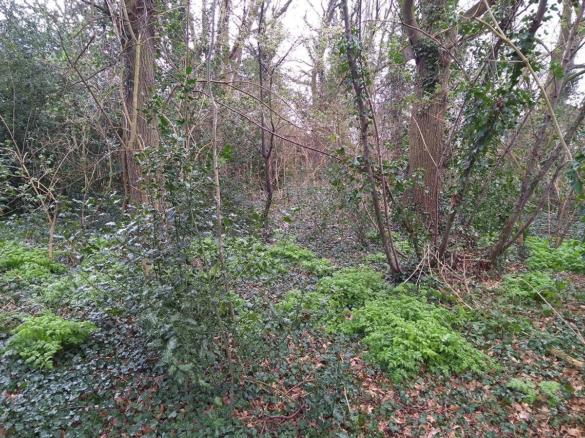 Hogsmill Wood Nature Reserve